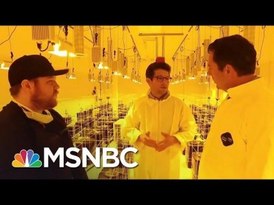 The 2016 Election And The Marijuana Vote | MSNBC